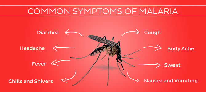 simptome malarie